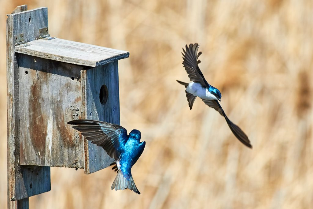 Haiku about home: birds and a birdhouse