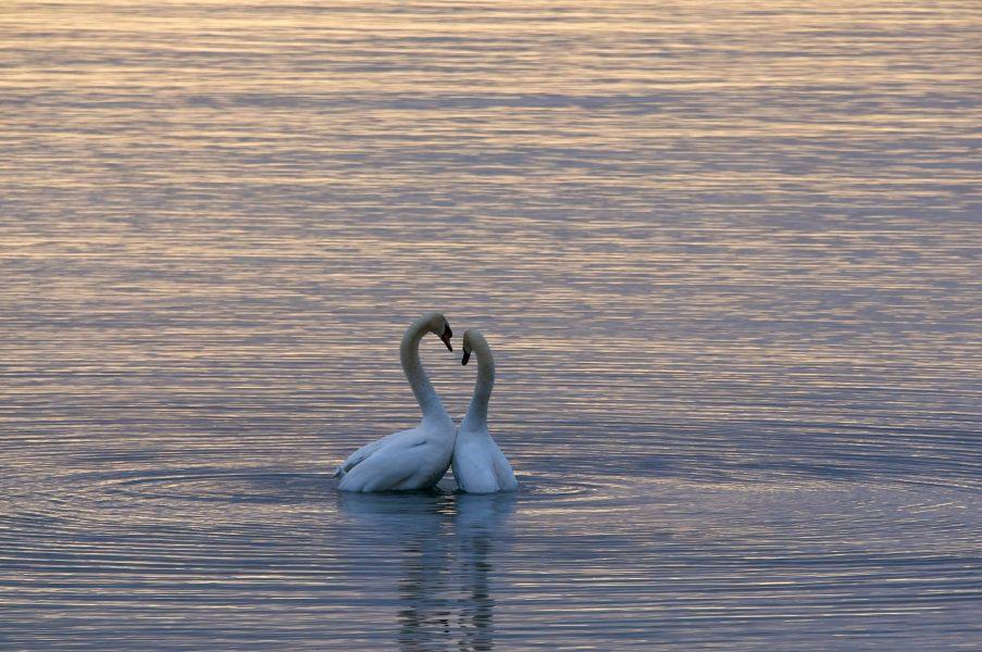 haiku about love