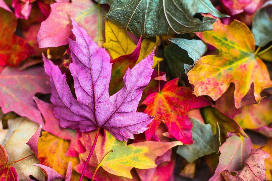 Haiku about seasons